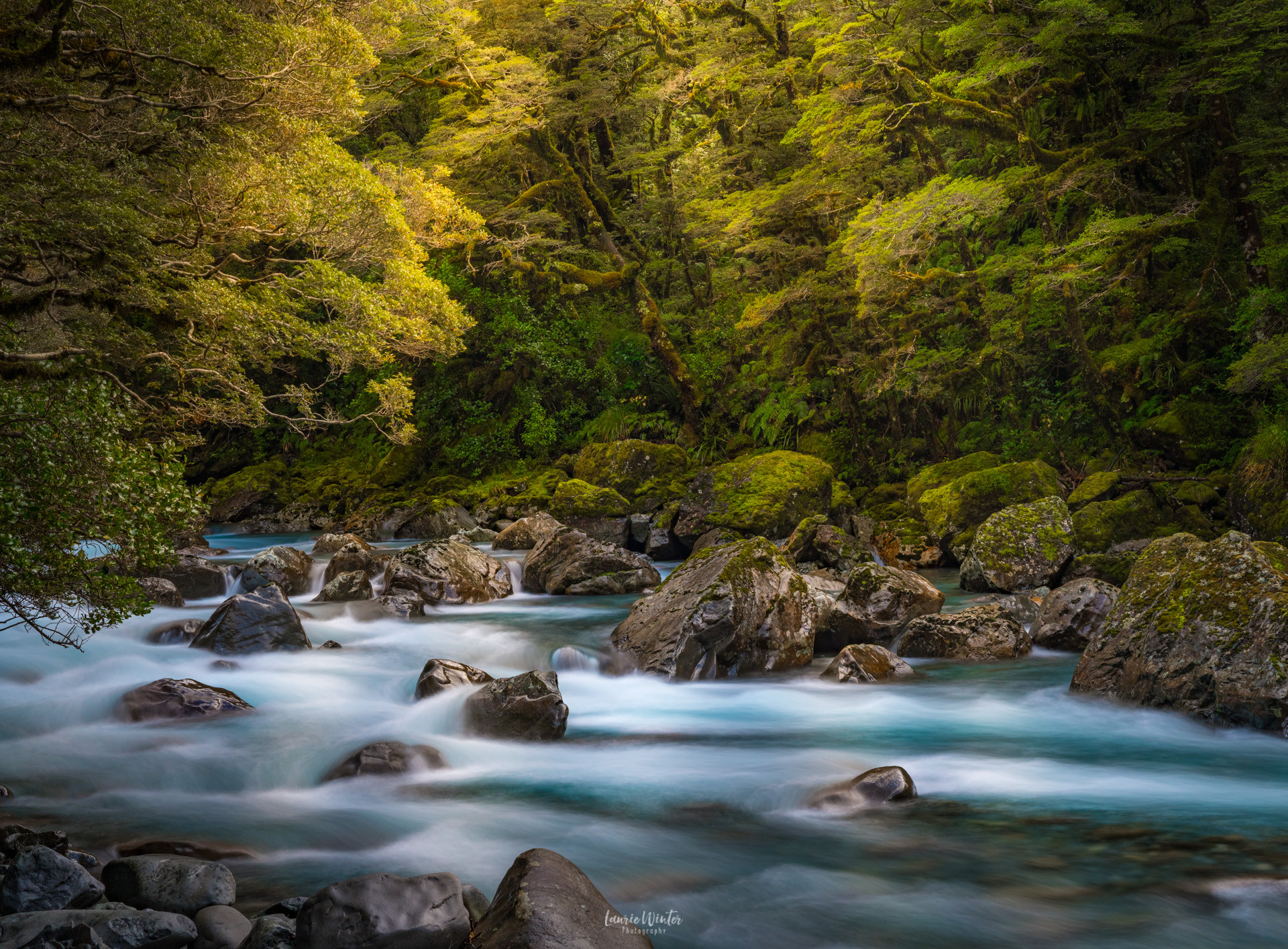 hollyford-river-milford-road-new-zealand