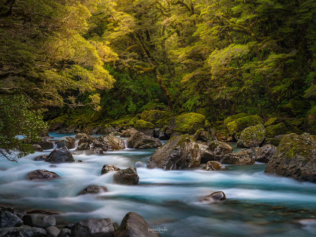 Hollyford River Milford Sound Road
