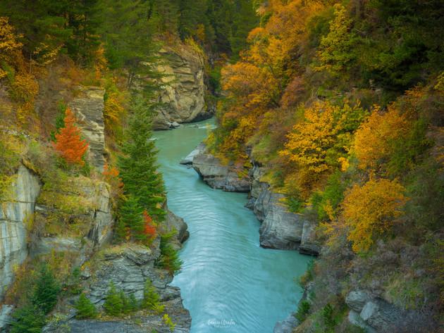 Shotover River Autumn