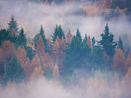 Misty Autumn Trees in Queenstown