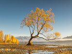 That Wanaka Tree in Autumn Colours