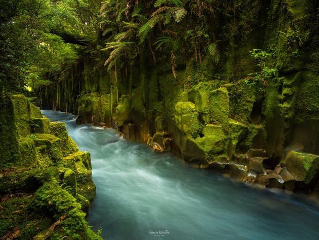 Te Whaiti-Nui-A-Toi Canyon in Whirinaki Forest Park