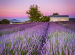 Alphra Lavender Farm Sunrise