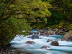 Hollyford River Scene Fiordland