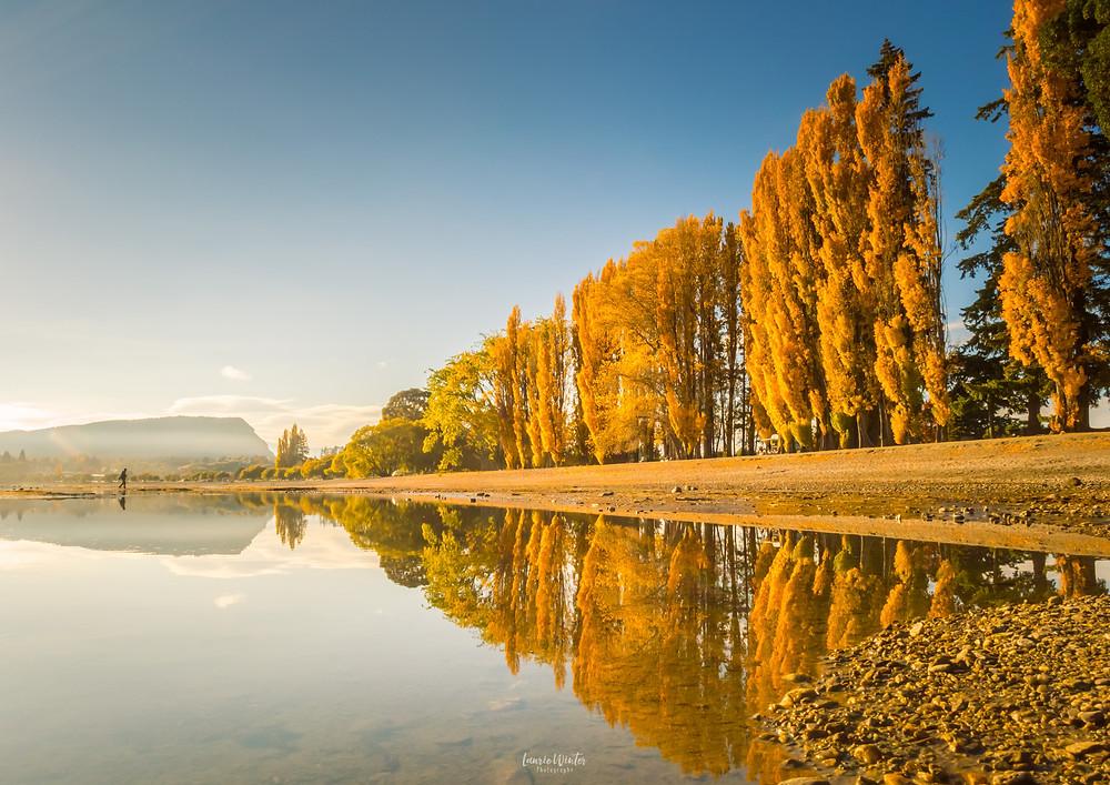 Autumn colours in trees at Lake Wanaka New Zealand