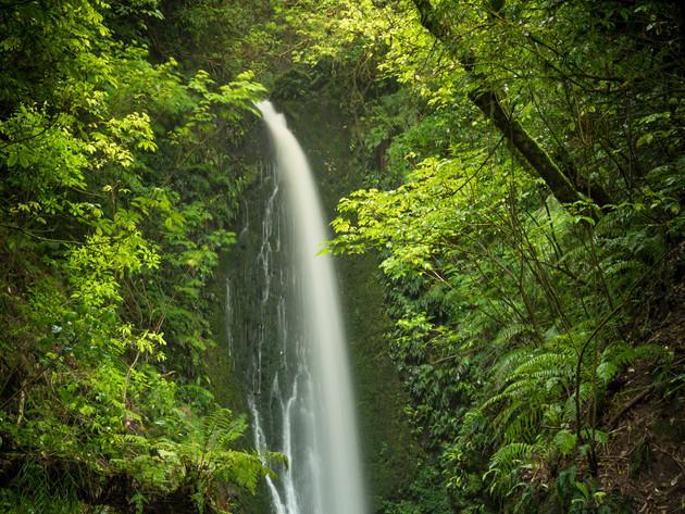 Nicols Falls Leith Valley Dunedin