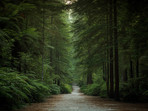 Beautiful Whakarewarewa Forest in Rotorua