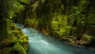 Whirinaki Canyon Rotorua