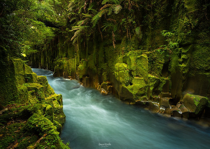 Lush green walls of the Te Whaiti-Nui-A-Toi canyon in the Whirinaki Forest Park near Rotorua, New Zealand. New Zealand photography by Laurie Winter.