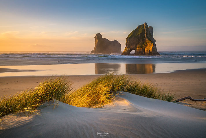 The Archway Islands and Wharariki Beach in New Zealand are coloured golden at sunset. New Zealand photography by Laurie Winter.