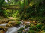 Catchpool Stream Orongorongo Valley