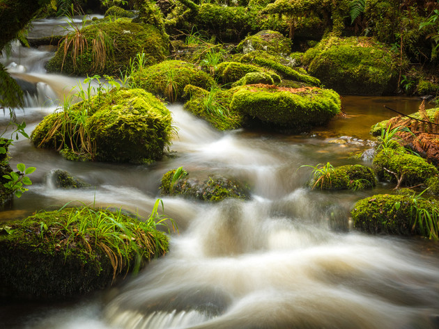 Mossy River Catlins New Zealand