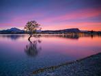 Wanaka Tree Summer Sunrise