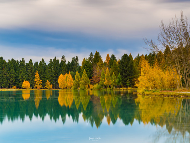 Autumn Trees at Lake Ruataniwha Twizel