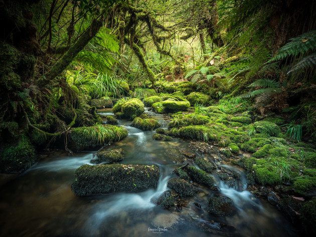 Lush Catlins River Scenes