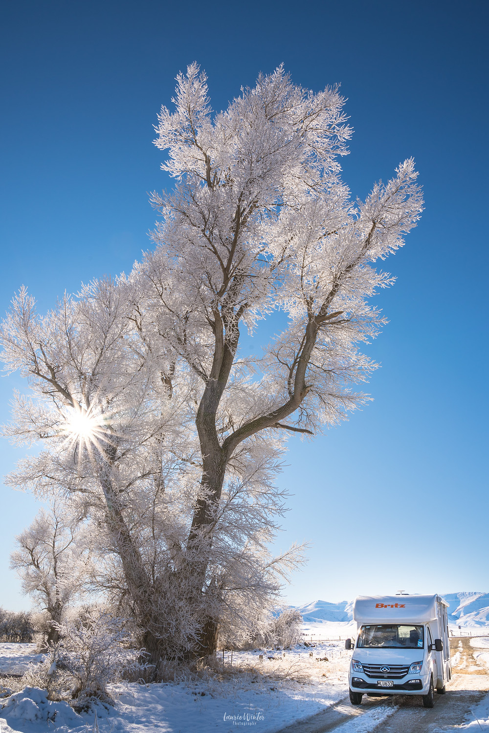 Ice covers the trees during a hoar frost near Ranfurly in Otago