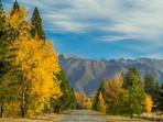 Autumn Trees Glen Lyon Road