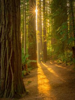 Rotorua Redwoods Sunshine