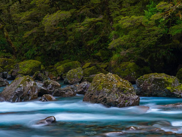 Fiordland River near Milford Sound