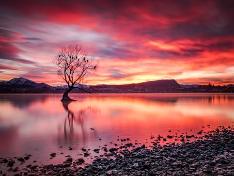 lake-wanaka-tree-red-sunrise.jpg