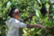 east-timor-Quirlelo7.jpg