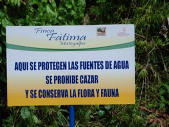 ファティマ2.png