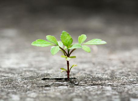 Resiliência - Como levamos porrada da vida e continuamos de pé?