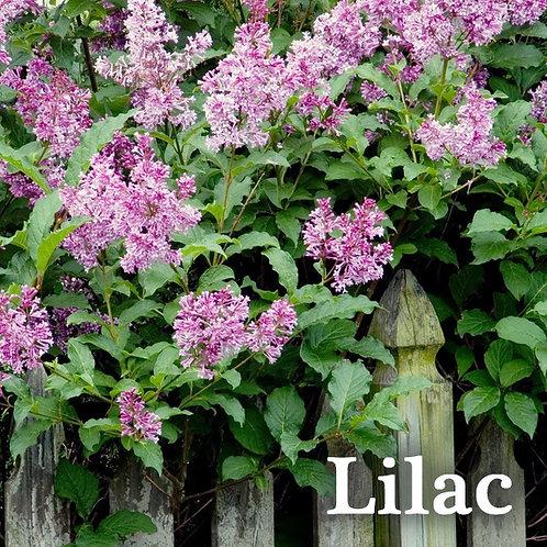 Lilac Jar Candle