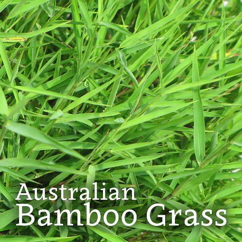 Australian Bamboo Grass Jar Candle