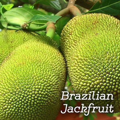Brazilian Jackfruit Jar Candle