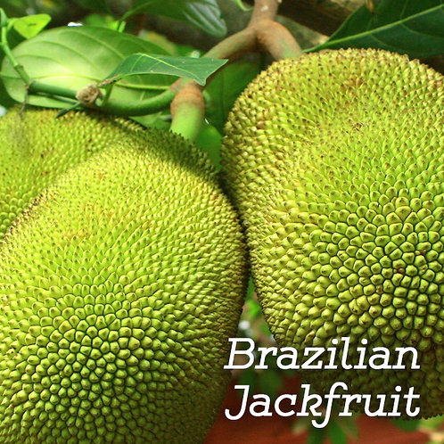 Brazilian Jackfruit Wax Melts