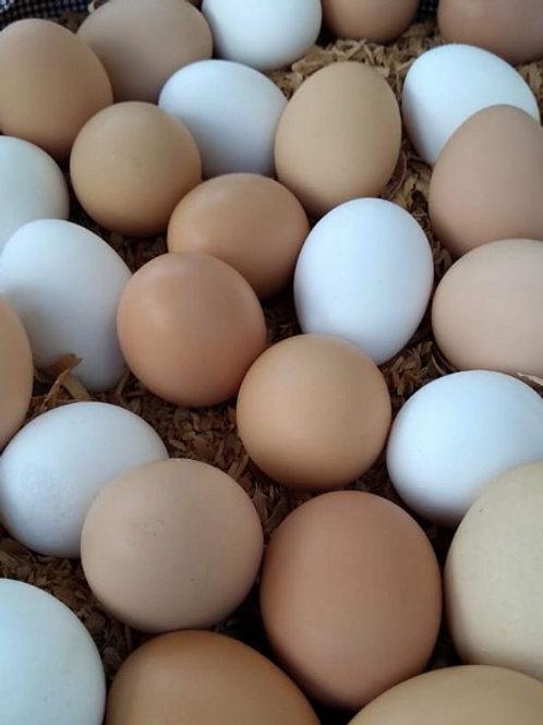 Huevo de Gallina 100% Orgánico (12 piezas)