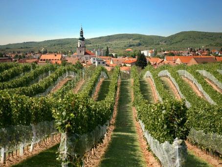Slovakia - The hidden wine gem