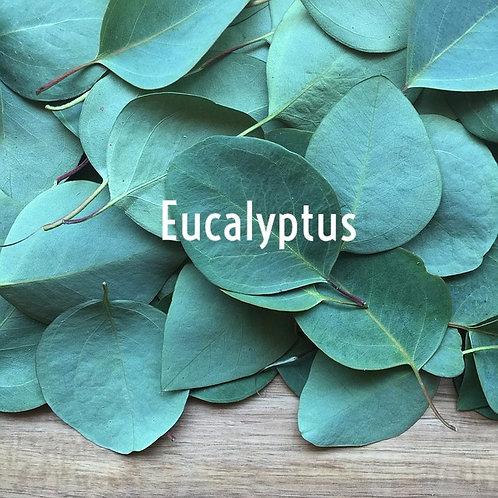 Eucalyptus Jar Candle