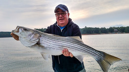 Trophy Striper Fishing