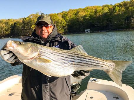March Striper Fishing on Lake Hiawassee