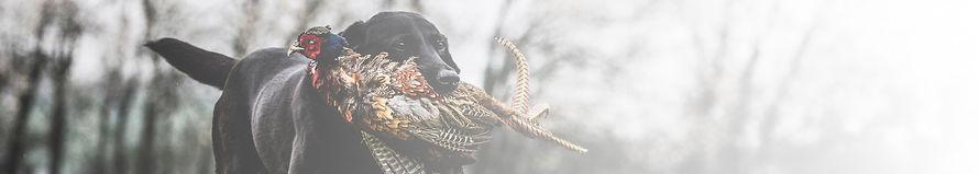 black-labrador-dog-running-across-a-fiel