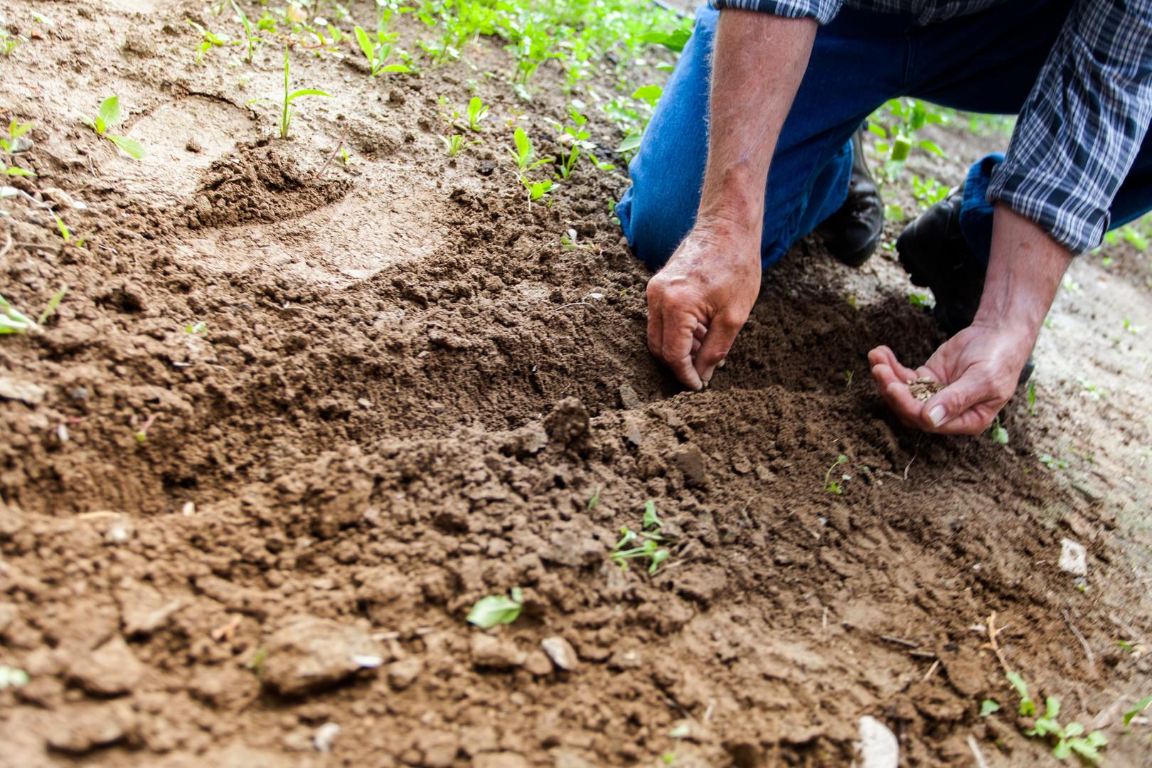 close-up-cultivation-dig-169523.jpg