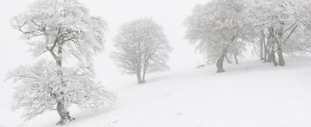 Panorama d'hêtres enneigés à Iraty Pays Basque