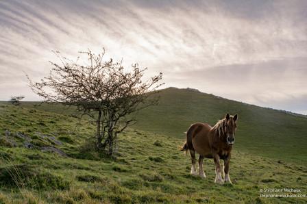 Le cheval et l'aubépinier en lumières