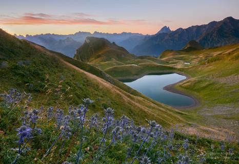 Lac du Montagnon d'Iseye, chardons bleus, pic d'Ossau à l'aube