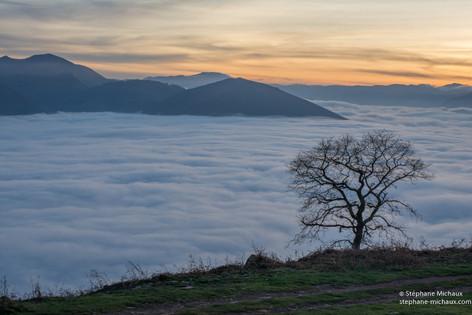 Mer de nuages au Jara et l'arbre au crépuscule