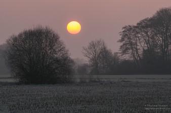 Lever de soleil, paysages de plaine l'hiver