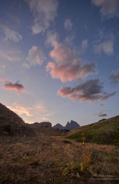 Grande gentiane fanée, et lumières du soir sur le pic d'Ossau