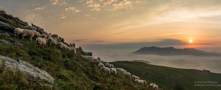 Panorama de brebis en montagne au Pays Basque