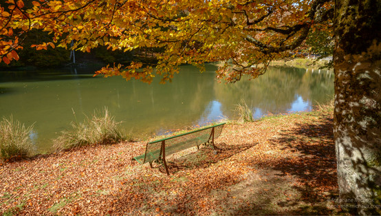 Lac et banc au bord du lac en automne
