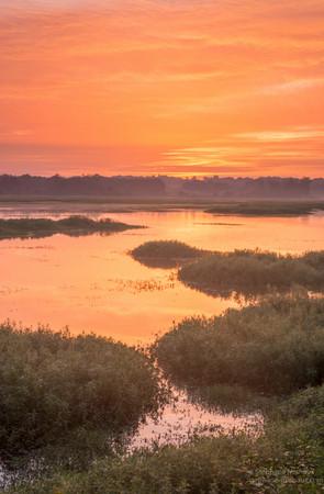 Aurore couleur orange au marais d'Orx (2)