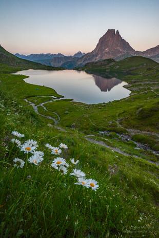 Marguerites, lac d'Ayous et pic d'Ossau au crépuscule