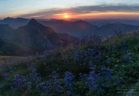 Chardons bleus au coucher de soleil et pic de Bergon