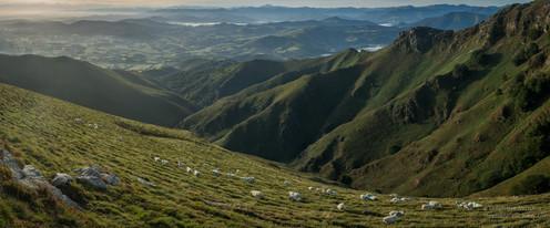 Panorama de brebis au Baigura